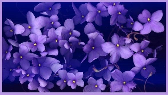 violet4WP@@@