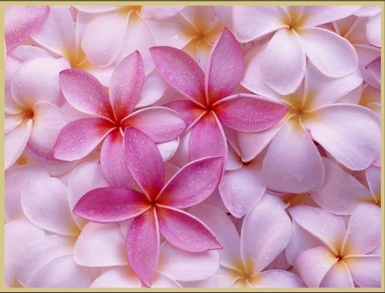 flowers4WP@@@