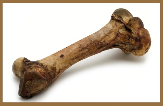 bone4WP@@@
