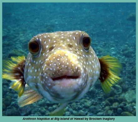 fish4WP@@@