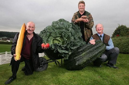 giant veg