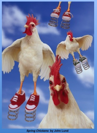 chickens4WP@@@