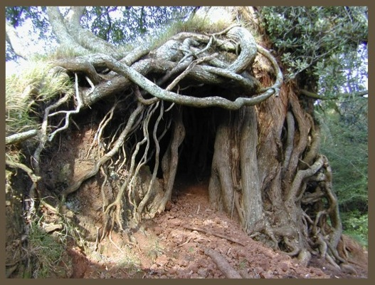 root4wp