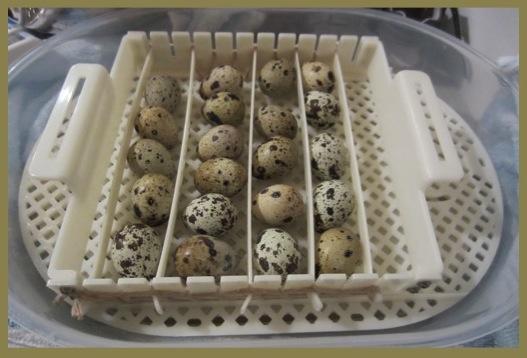 eggs4wp